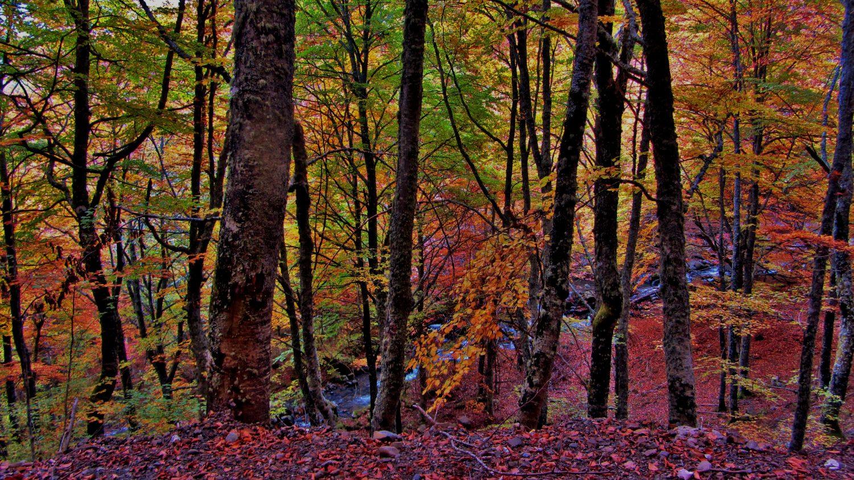 Fondo otoño bosque asturias vertical